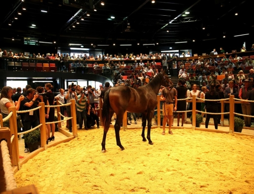 Zoom sur…Ventes Breeze-up de Deauville – 10-11 mai 2019 (galop)